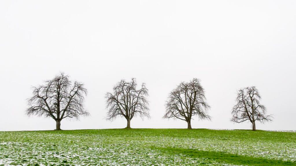 Baum-Quartett - Fotografieren mit dem Handy