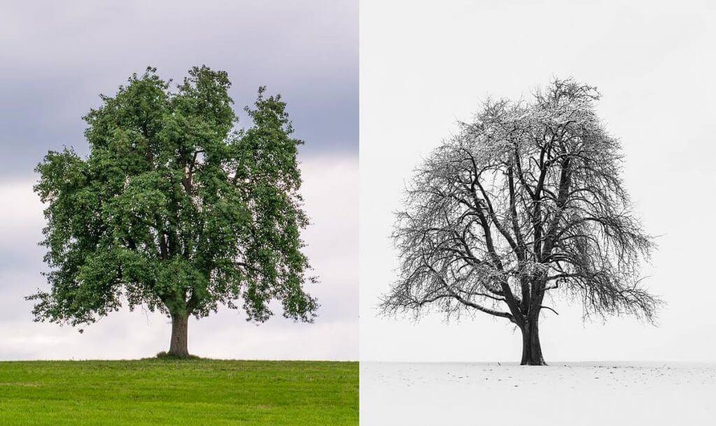 Baumnachbarn - Sukzession - Links Frühsommer, rechts im Winter