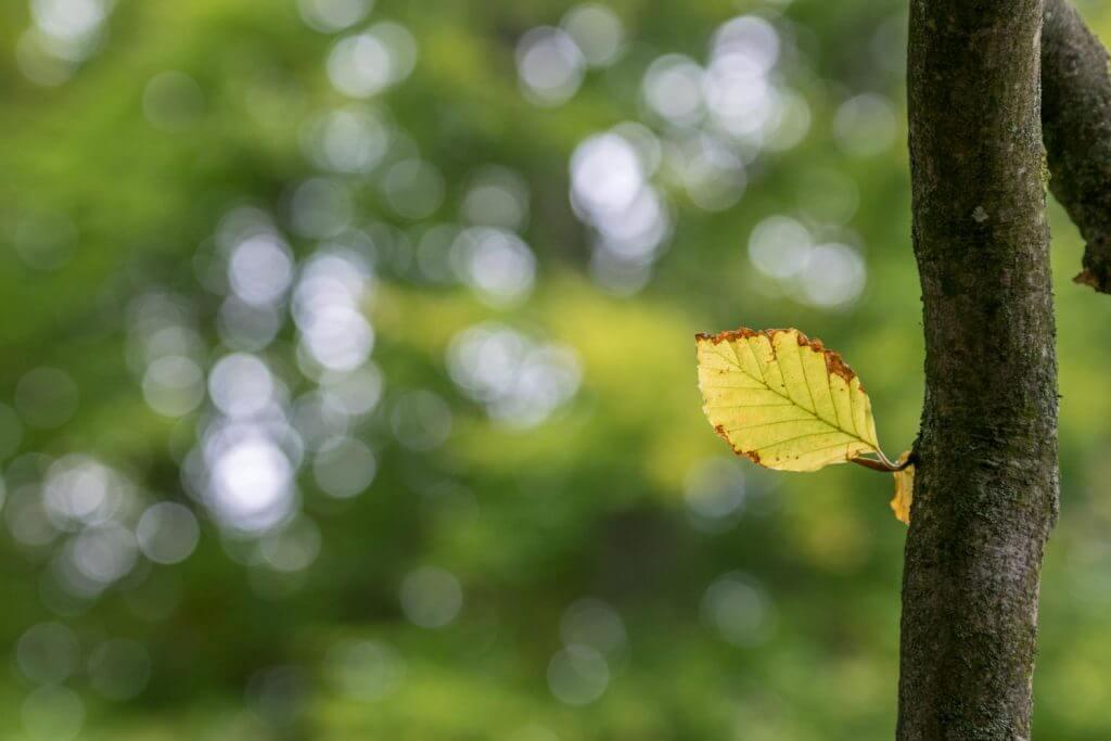 Blätter im Gegenlicht - mit wunderbarem Bokeh im Hintergrund