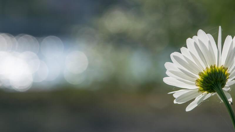 Blüte im Gegenlicht mit wunderschönem Bokeh im Hintergrund