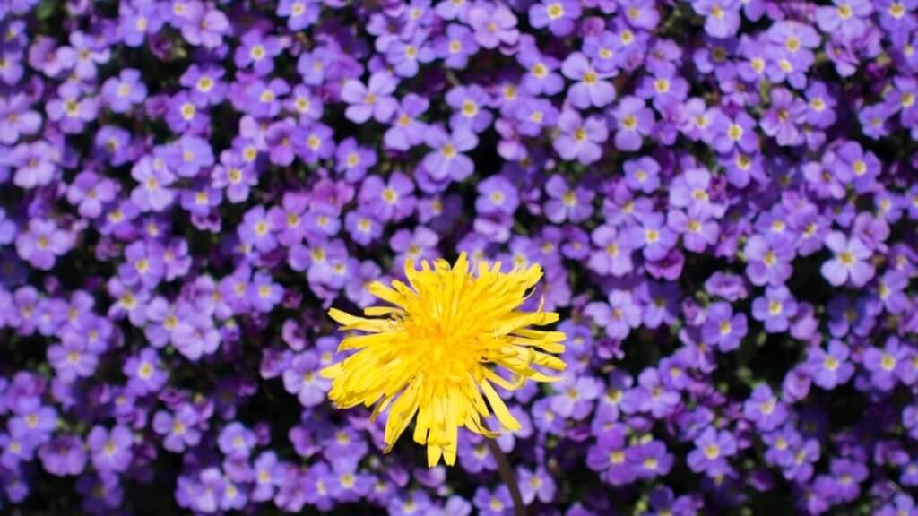 Kompaktkamera - Blütenfarben mit hohem Kontrast