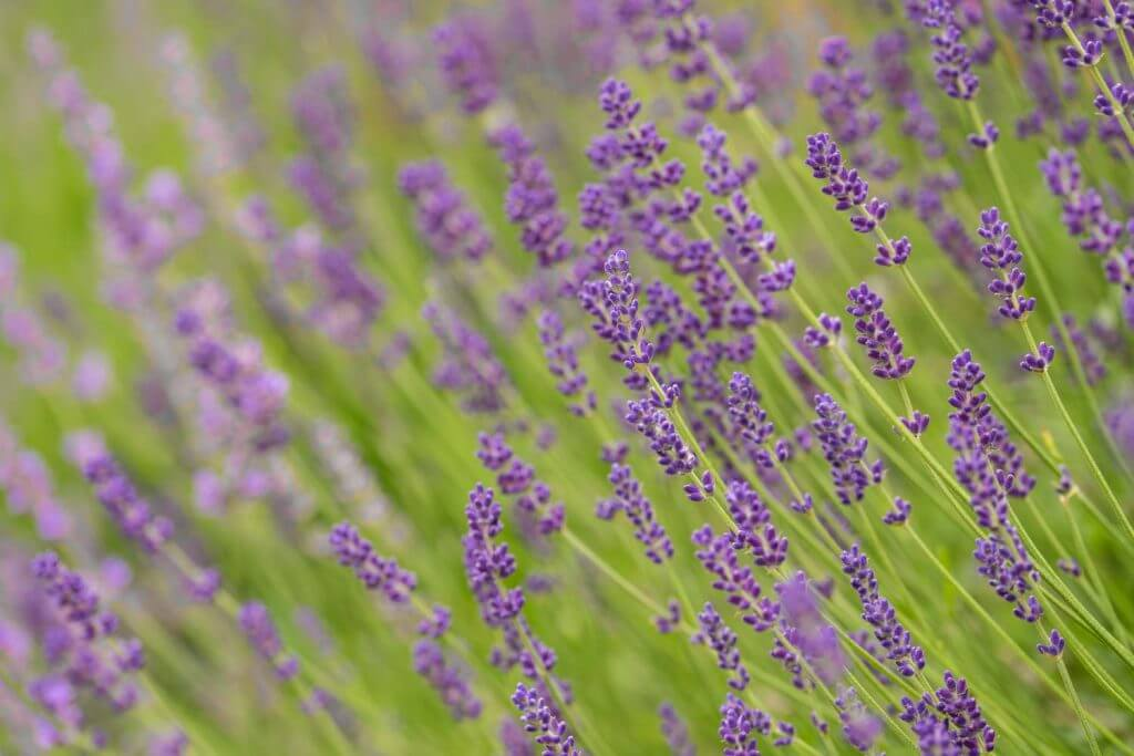 Blütenzauber im Sommer - besser fotografieren lernen