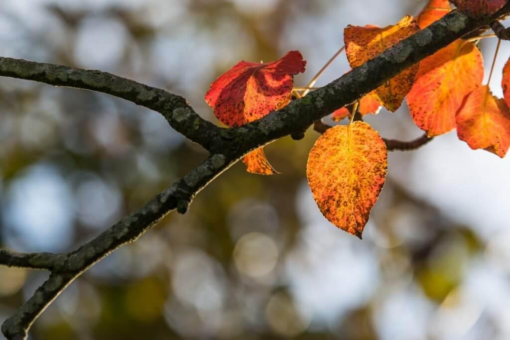 Herbstblätter mit Bokeh im Hintergrund
