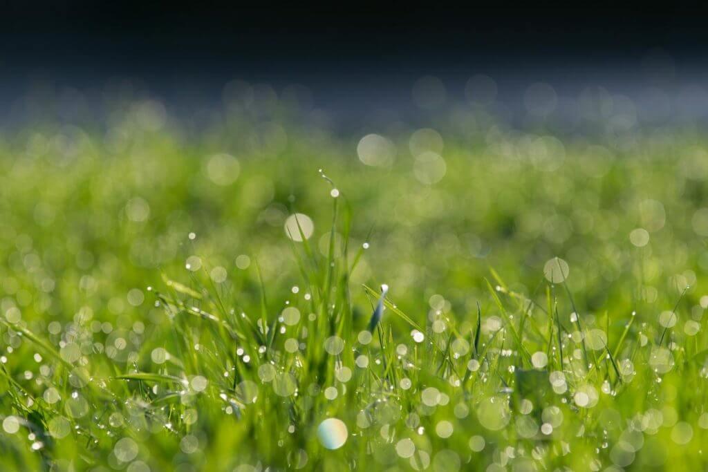 Bokeh-Effekt Gras mit Spitzlichtern
