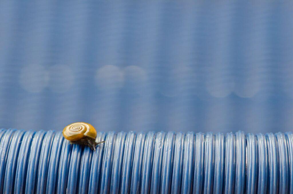 Goldener Schnitt - Schnecke auf blauem Stuhl