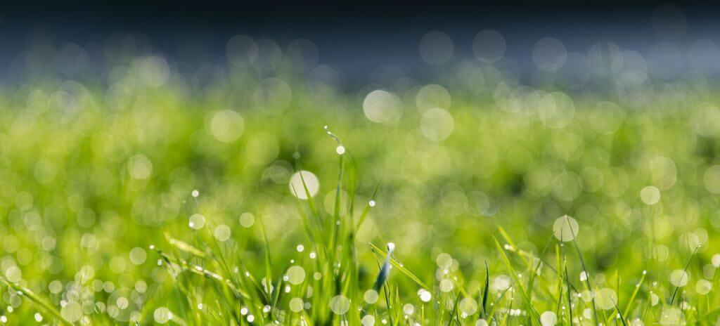 Gras mit Spitzlichtern und schönem Bokeh-Effekt