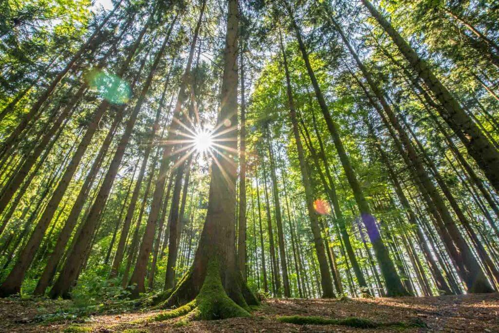 Lichtstimmung im Frühlingswald - Im Wald fotografieren