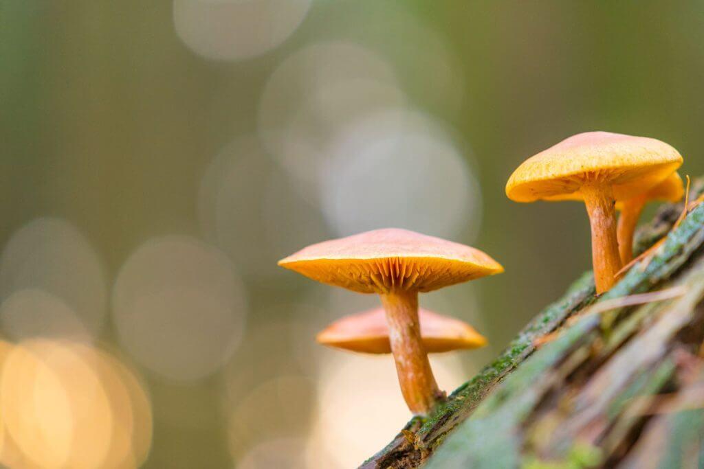 Minipilze im Wald ganz gross - Waldfotografie