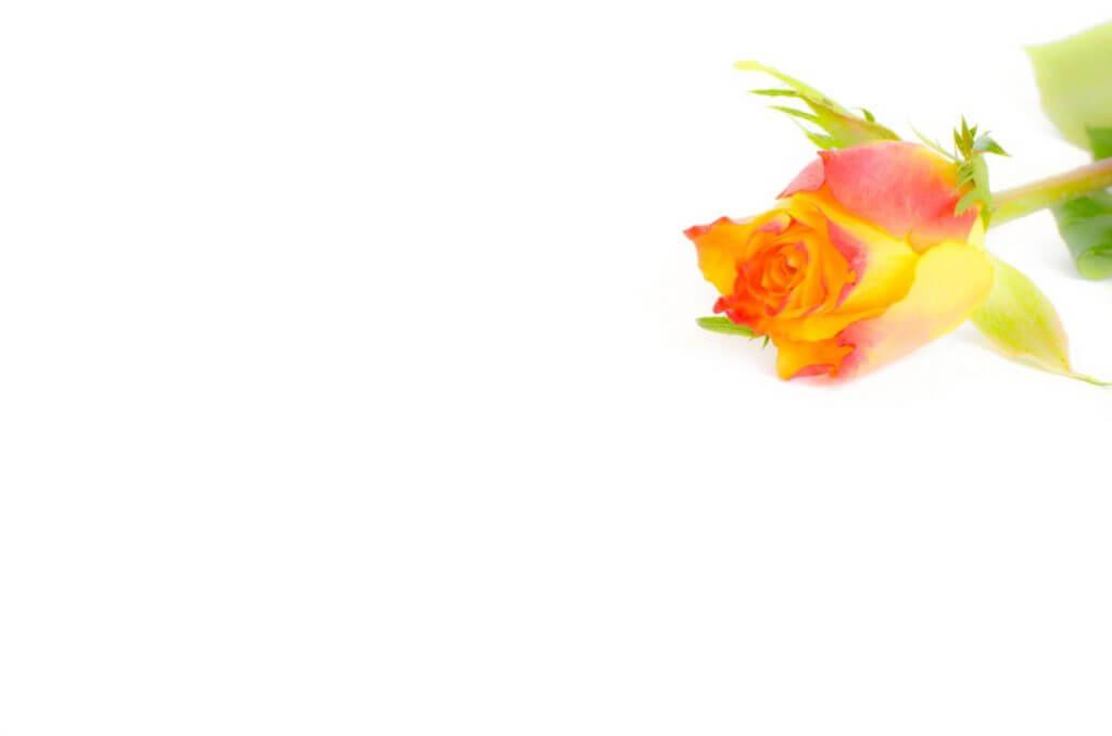 Muttertagskarten Rose auf weissem Tuch