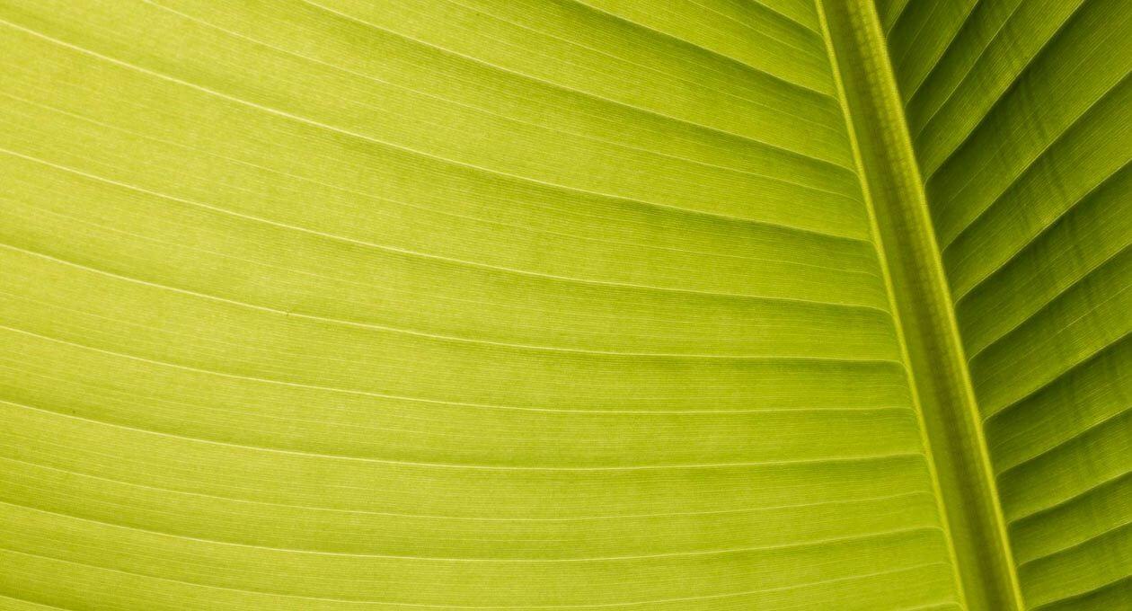 Palmblatt im Gegenlicht
