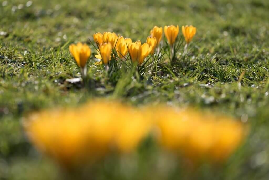 Schärfe einmal anders gesetzt - Fotografieren im Frühling