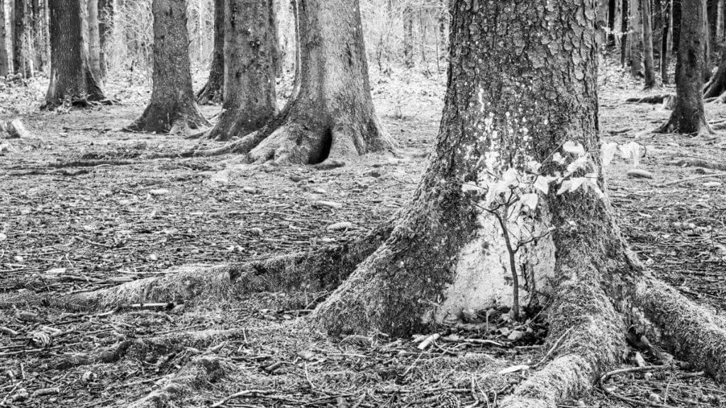 Winterwald mit geschlossener Blende