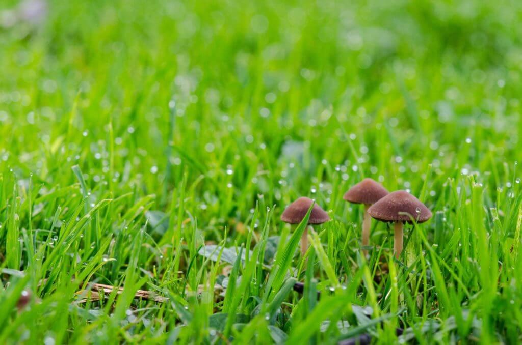 Pilze im taufrischen Gras - besondere Perspektiv