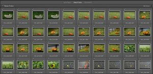 Miniaturansicht - Bilder in Lightroom importieren