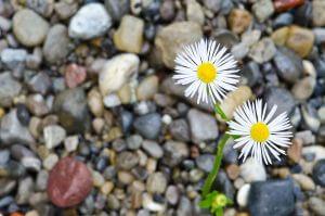Blumen im Bachbett, grosse Schärfentiefe