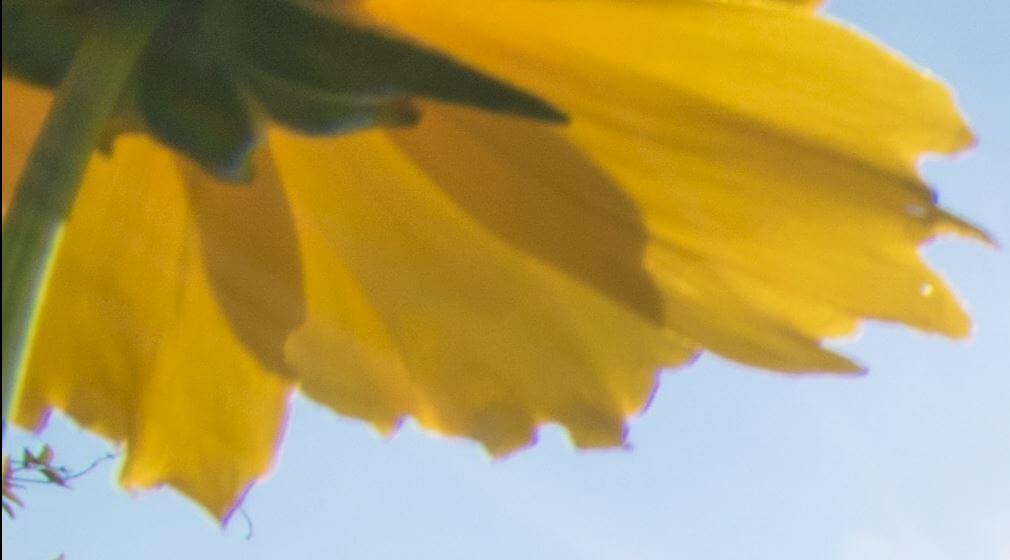Typische Farbsäume - chromatische Aberration am unteren Rand der Blütenblätter, 1:1-Ausschnitt