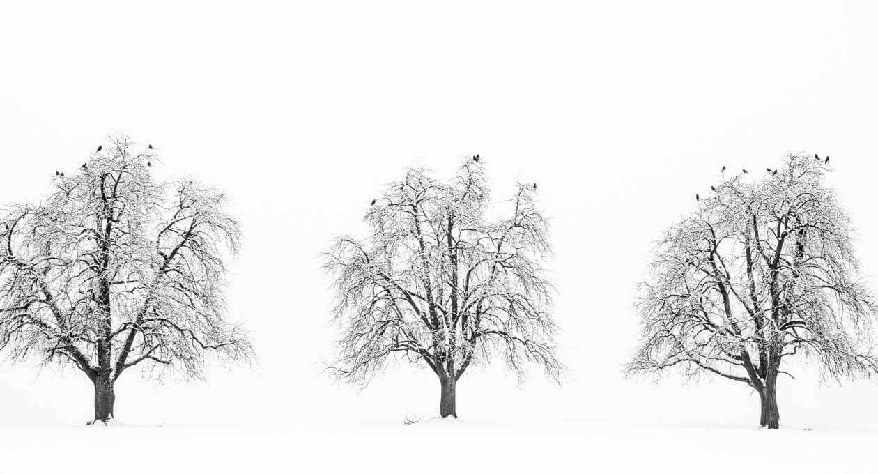 Drei Winterbäume mit Vögeln - Fotografieren im Schnee