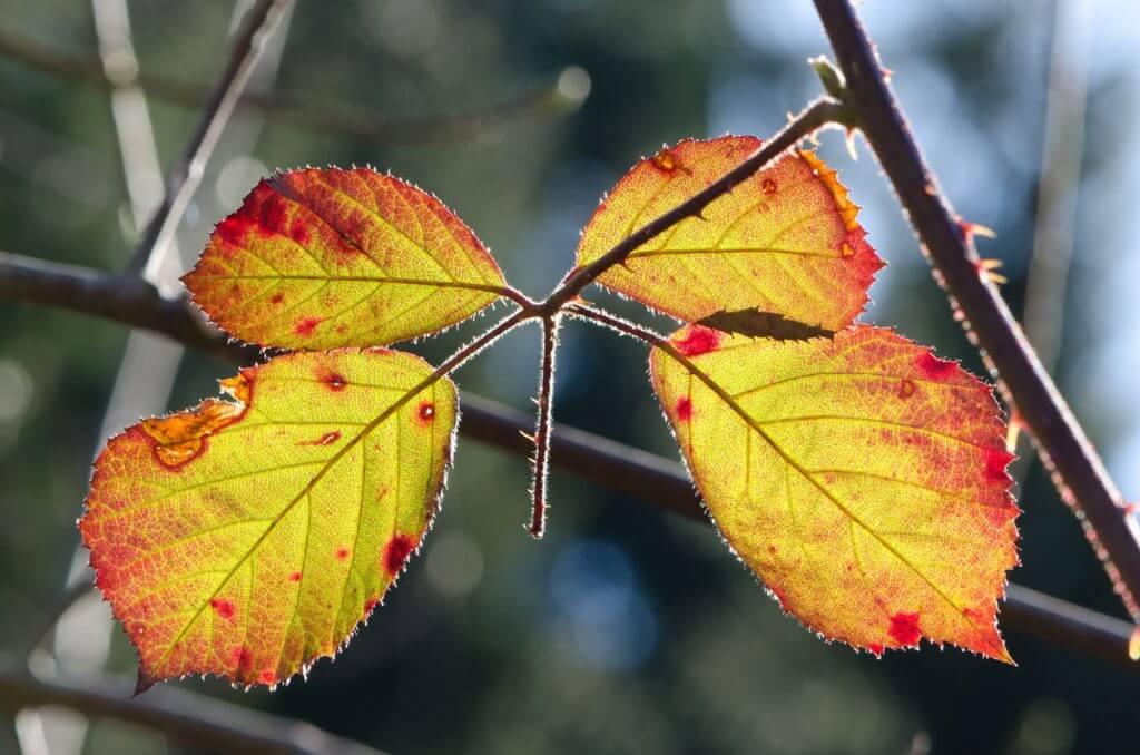 Blätter im Gegenlicht - Motivideen