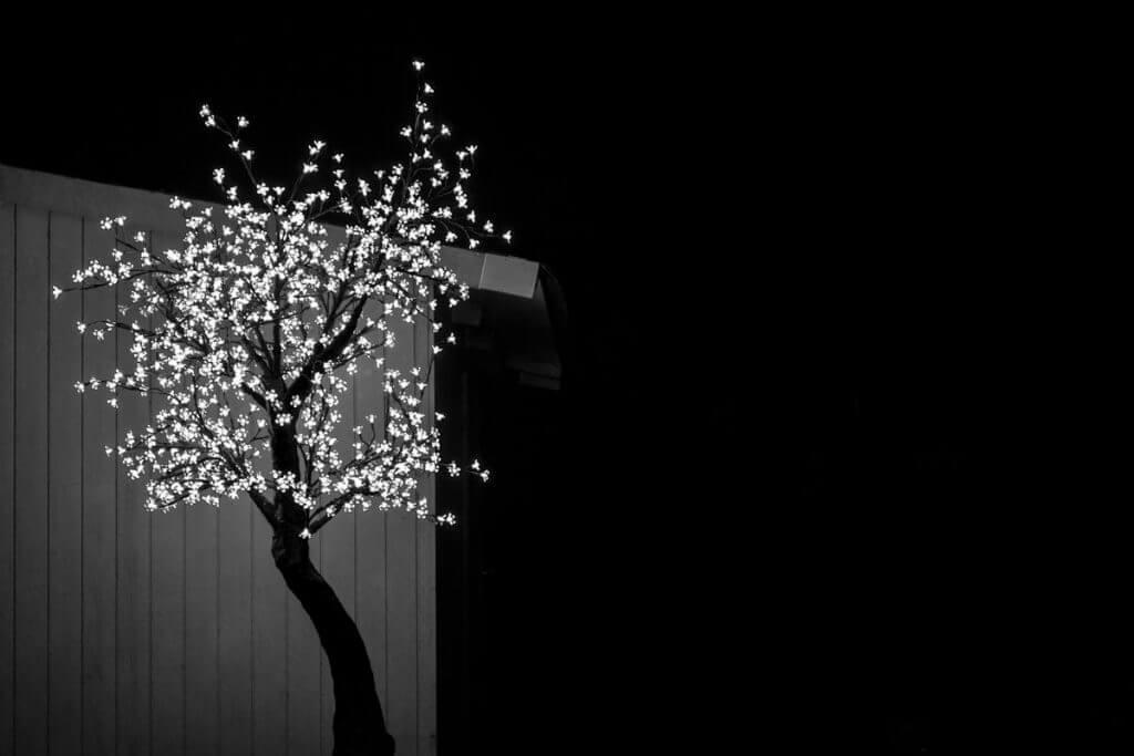 Beleuchteter Baum - Low Key Aufnahmen