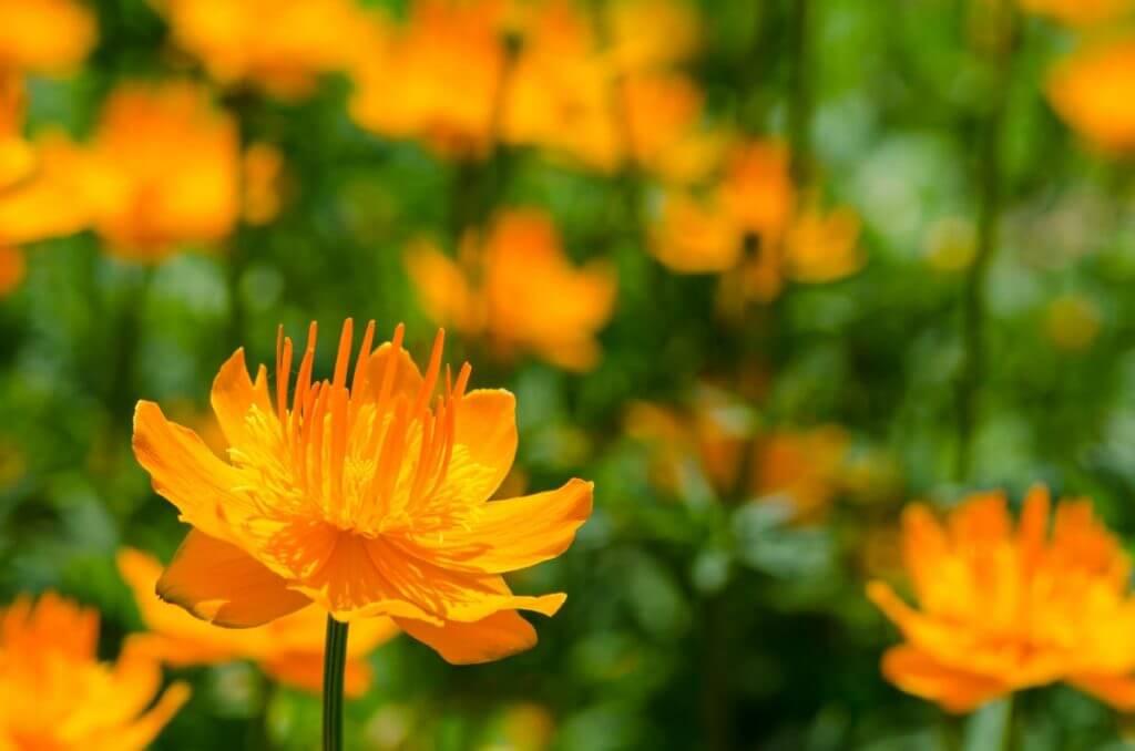 Orange Blüten - Drittel Regel