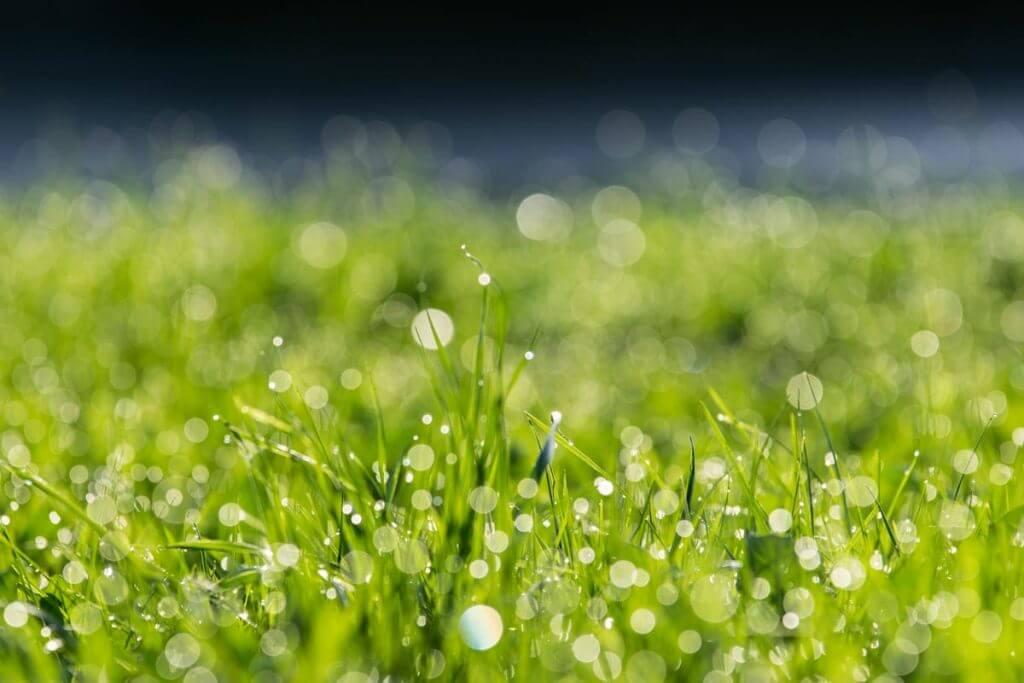 Spitzlichter im Gras - Bokeh Effekt