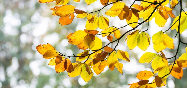 Farbenspiel im Herbst