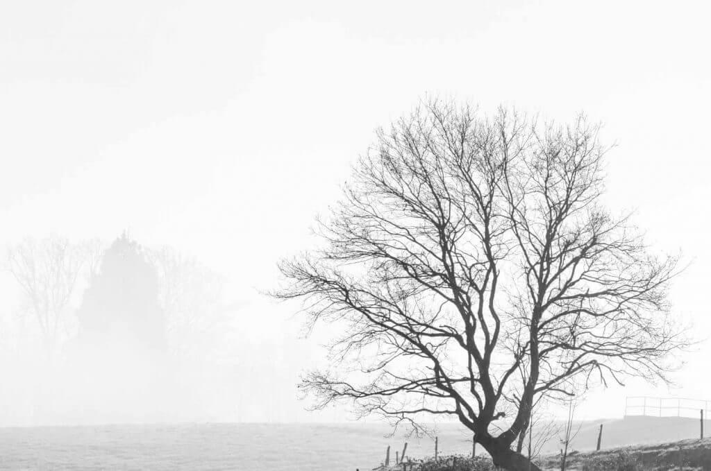 Fotografieren im Nebel - Baumsilhouette