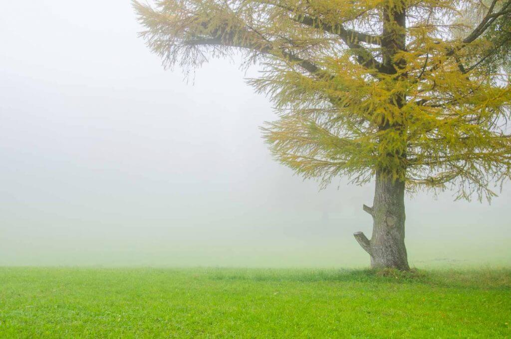Herbststimmung im Nebel
