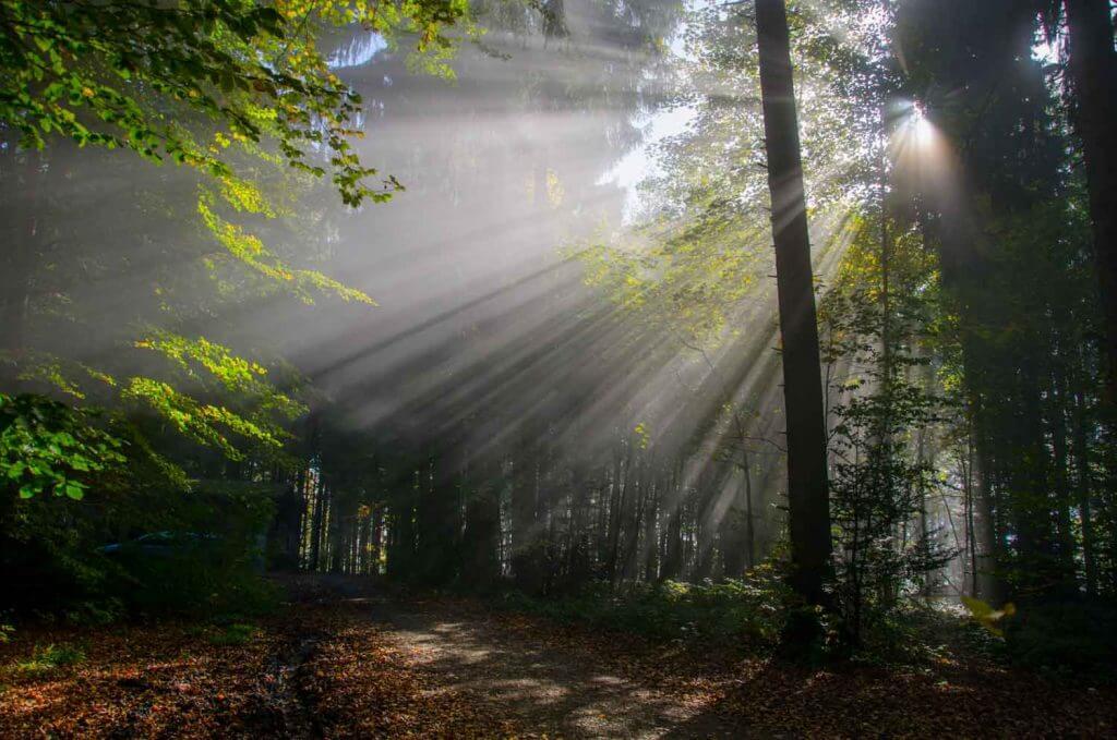 Sonnenstrahlen im Wald - Im Nebel fotografieren