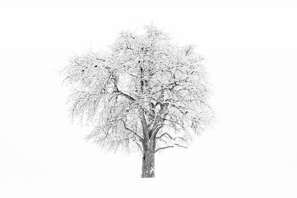 Winterbaum-Idylle