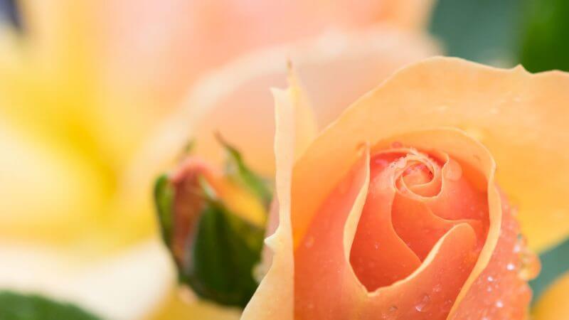 An Blumenschauen fotografieren