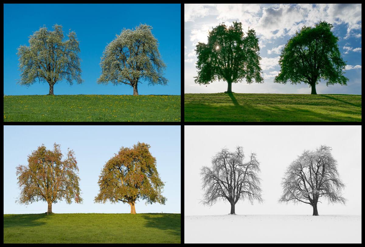 Bildcollage mit den Vier Jahreszeiten