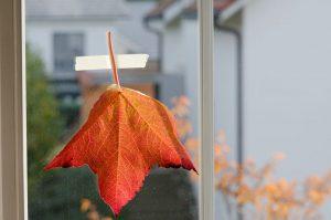 Herbstblatt an einer Scheibe fixieren