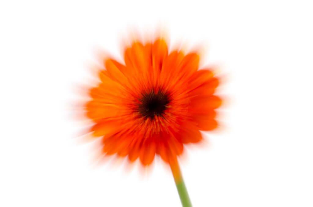 Zoom-Effekt mit einer Blüte