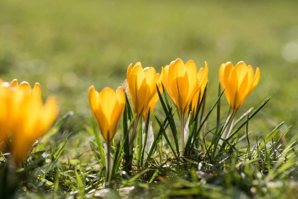 Frühlingsboten im Botanischen Garten
