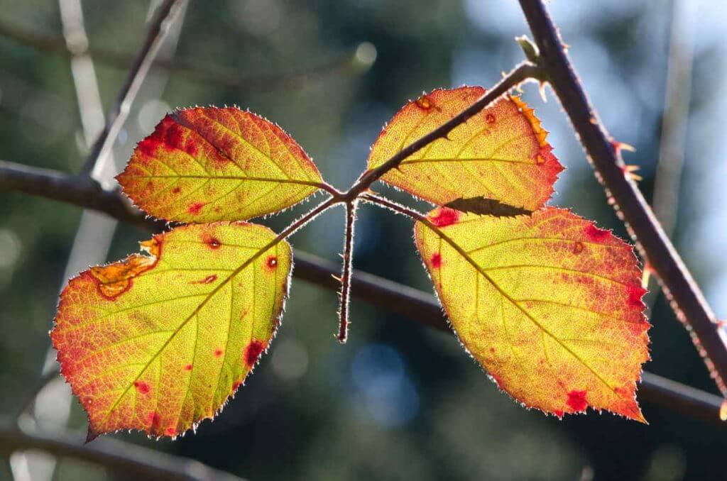 Herbstblätter im Gegenlicht-Wie entsteht ein digitales Bild