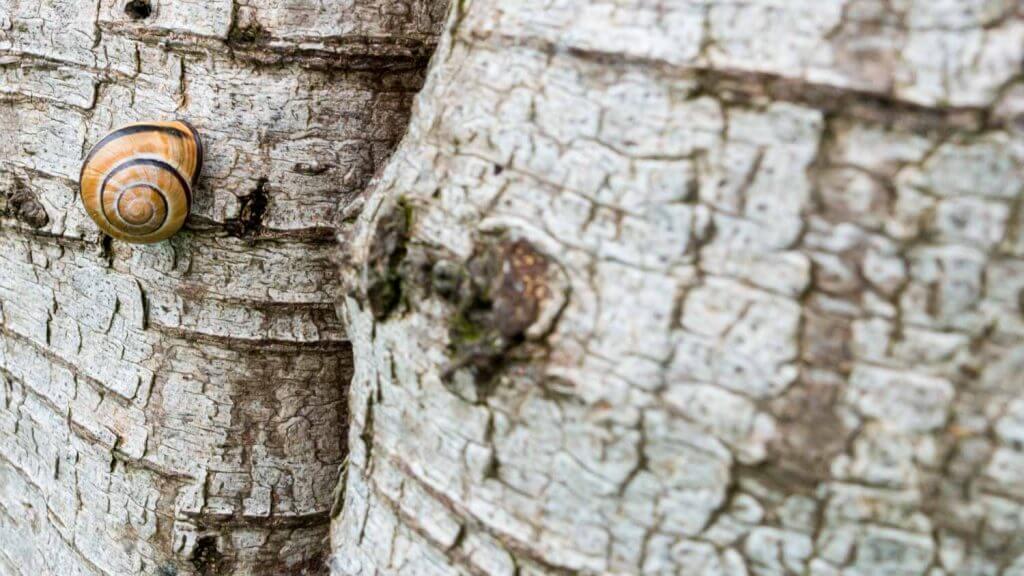 Ausgangsbild - Schnecke an einer Birke