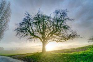 hoher Kontrastumfang bei Gegenlicht - Baum im Herbstnebel