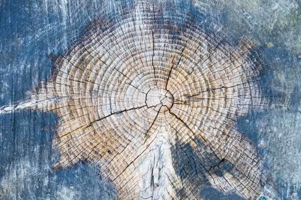 Holzstrukturen als Motiv