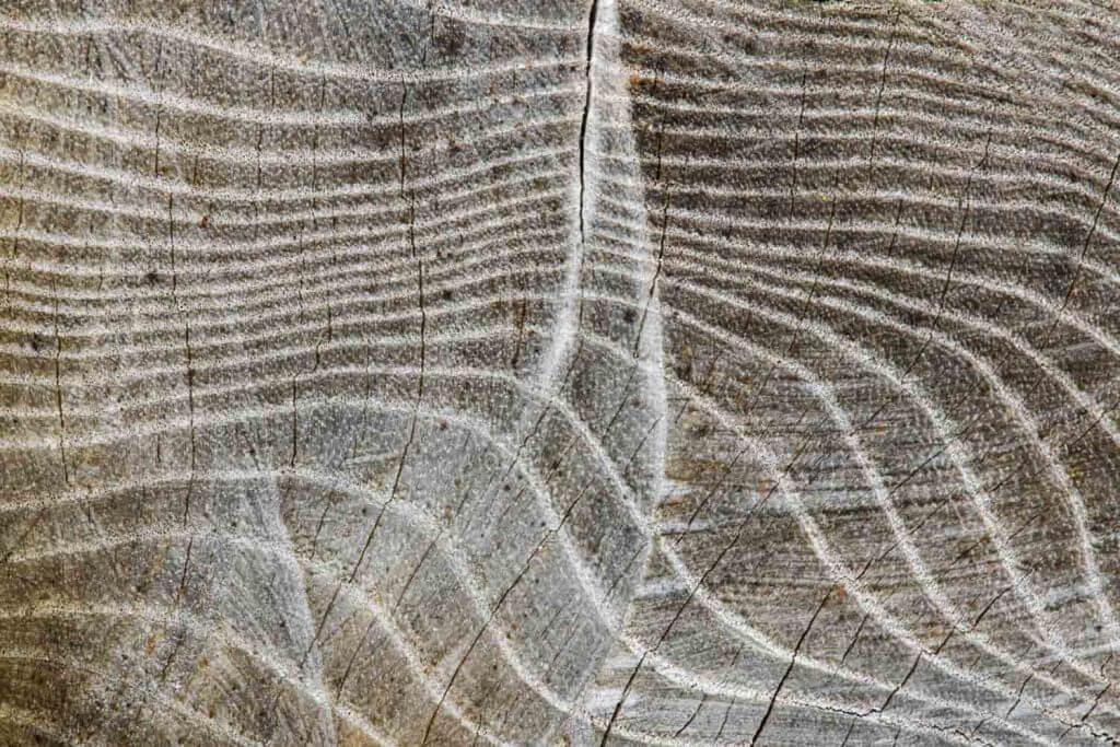 Holzstrukturen suchen - Motive mit Holz