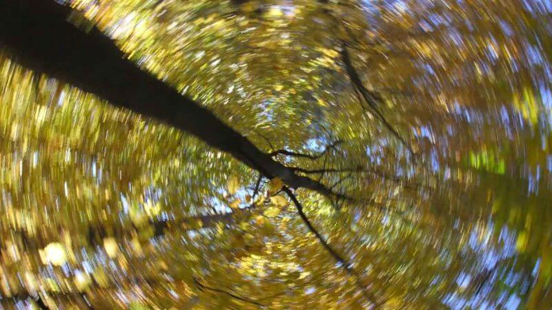 Herbstwald - Malen mit der Kamera