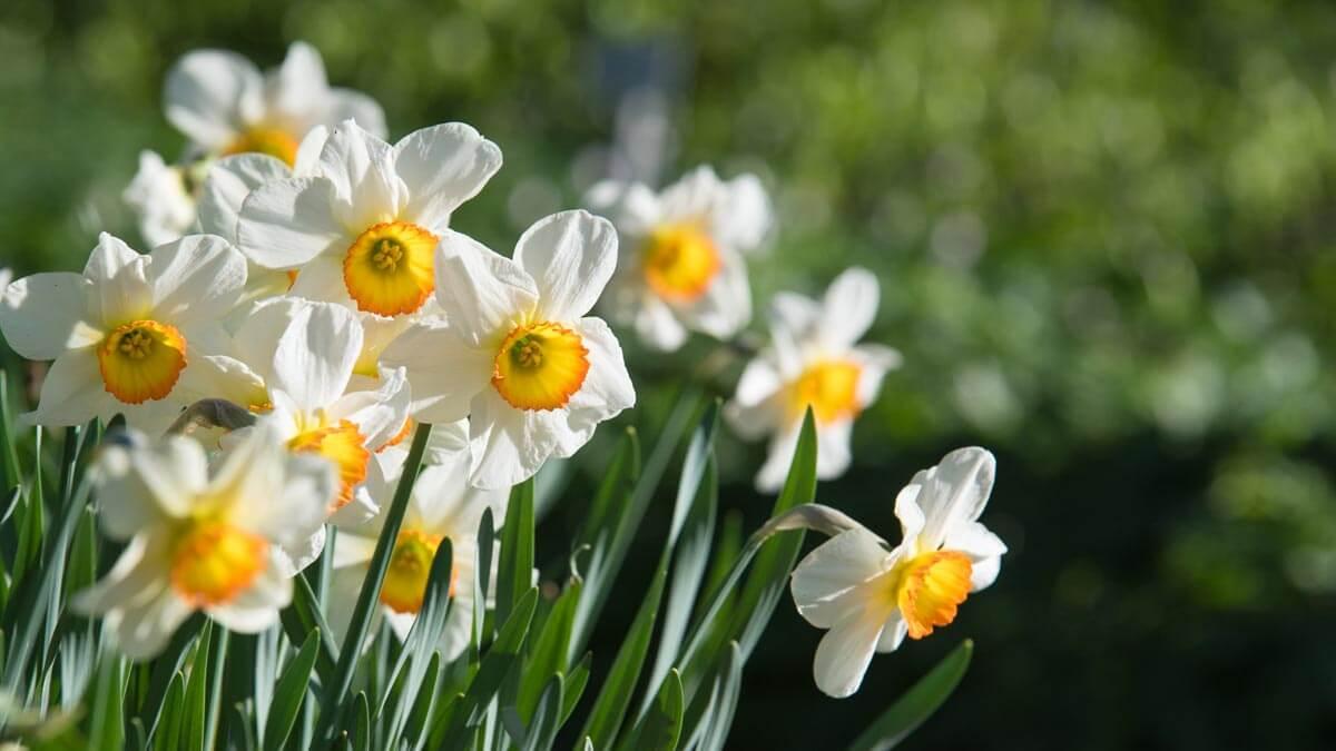 Gestaltungstipps Frühlingsbilder - die Motive ins rechte Licht rücken