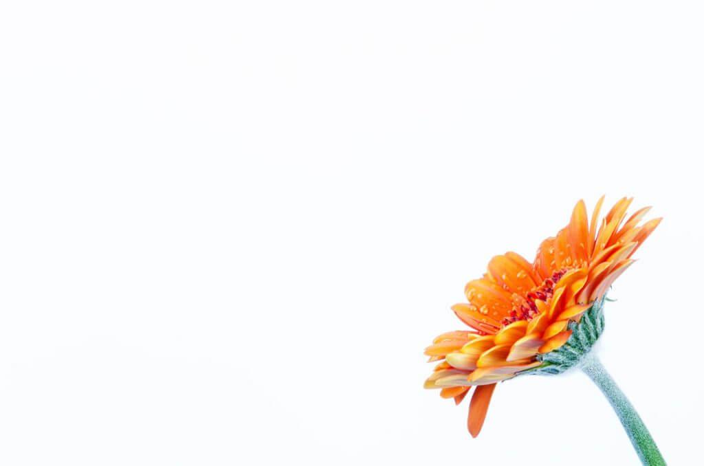 oranger Blütenzauber - Blüten und Blumen zuhause fotografieren