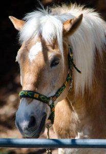 Pferdebild mit Verwacklung