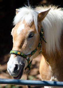 Pferdebild ohne Verwacklung