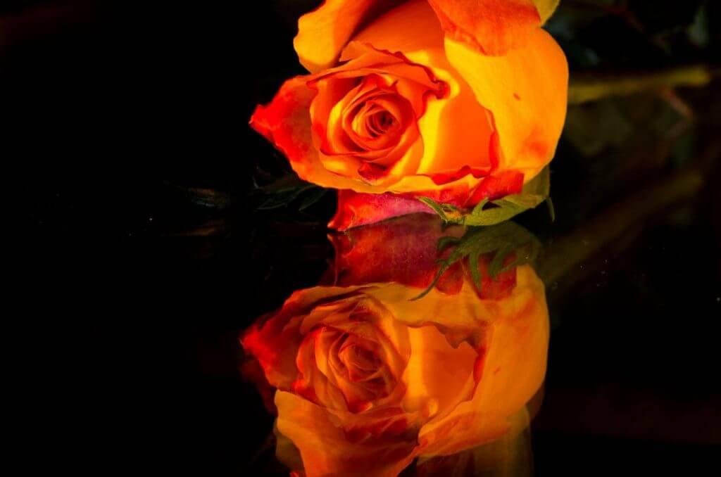 Rosen-Stilleben auf Glastisch