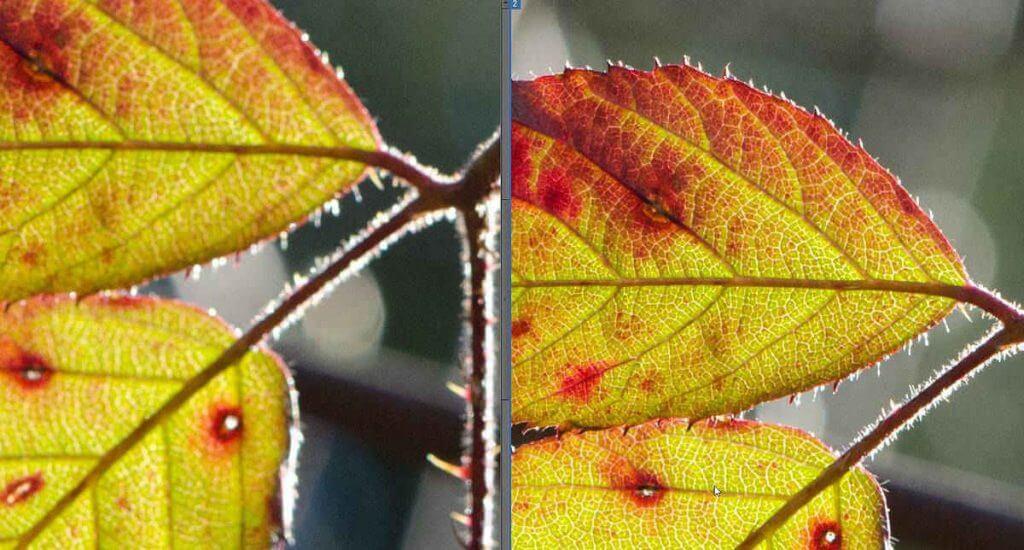Schärfe von Bildern in Photoshop Elements vergleichen