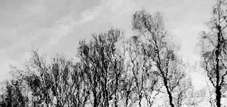 Sehtraining - den fotografischen Blick schulen - Spiegelung von Bäumen