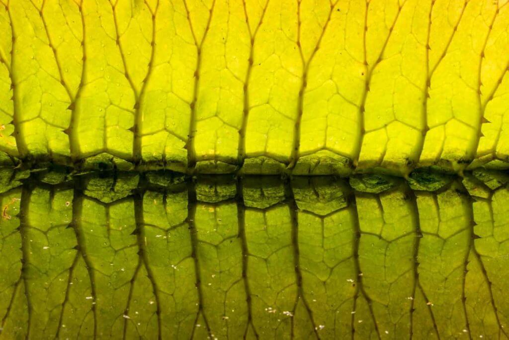 Spiegelung im botanischen Garten - Fotografieren im Botanischen Garten
