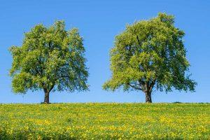 Obstbäume im Frühling - Sukzessionen
